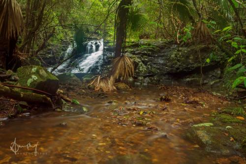 Rainforest Photography
